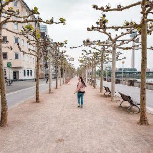 Düsseldorf Altstadt und typische Bepflanzung
